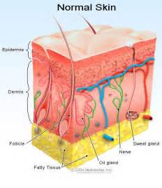 Definition Of Epidermis. All About Project Management World Au Pair. Check Internet Download Speed. Two Year Community Colleges Mold Removal Ny. Female Catheter Videos Weight Loss Pills Free. Health Savings Account Guidelines. Colleges In Vancouver Washington. Mississippi Divorce Lawyers Ford Dallas Tx. Third Party Merchant Account Alimony In Md