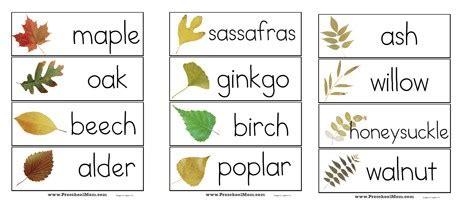 fall leaf preschool printables preschool 148   leafWordwall