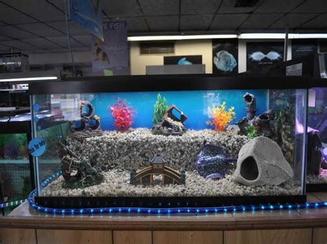 fish tank decorations cheap i like the different levels in this aquarium animal