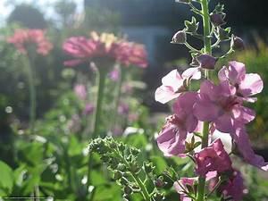 Blumen Im Sommer : download hintergrund blumen garten sommer morgen freie desktop tapeten in der auflosung ~ Whattoseeinmadrid.com Haus und Dekorationen