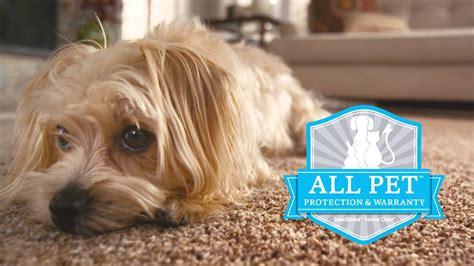 Best Carpet For Pets Smartstrand Forever Clean Youtube