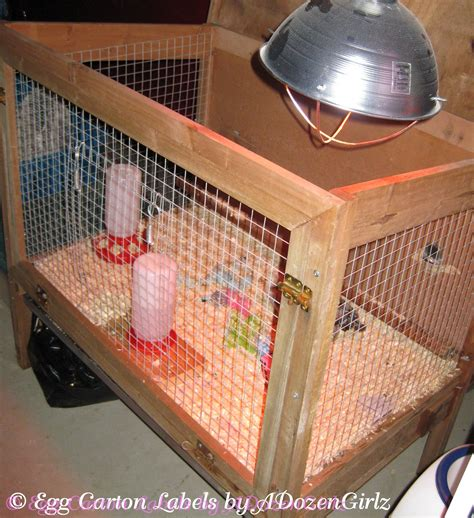 alternative to heat l for chickens the chicken the dangers of brooder heat ls a