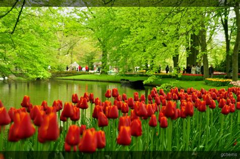 garden of tulips holland tulip gardens hd wallpapers hd wallpapers backgrounds photos pictures image pc