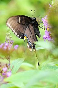 Beautiful Butterfly Garden