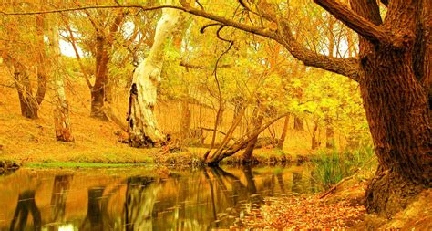 Yellow Autumn Trees Hd Wallpaper  Hd Latest Wallpapers