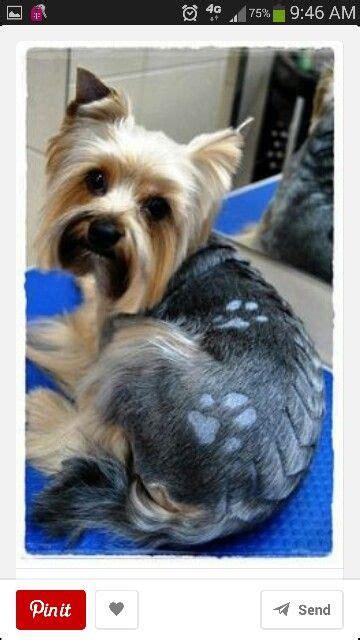 yorkie cute dog grooming hunde und kreativ