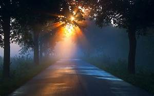 Road, Sunlight, Trees, Sunrise, Sunset, Fog, Rays, Wallpapers, Hd, Desktop, And, Mobile, Backgrounds