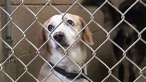 White And Brown Shelter Dog Looks Sad - YouTube