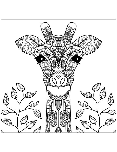 giraffes  color  children giraffes kids coloring pages