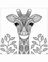 Coloring Pages Giraffes Children Justcolor sketch template