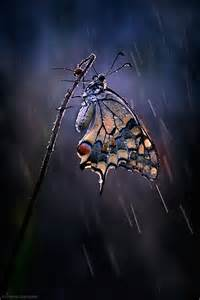 Rain Beautiful Butterflies