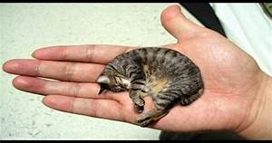 Fair 90+ Smallest Cat In The World Guinness 2015 ...