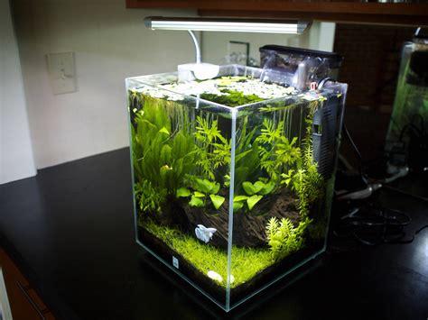 Fluval Chi 5 Gallon Aquarium  1000+ Aquarium Ideas