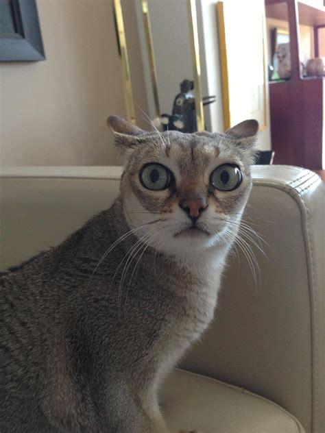 Funny Cats  Part 21 (42 Pics)  Amazing Creatures