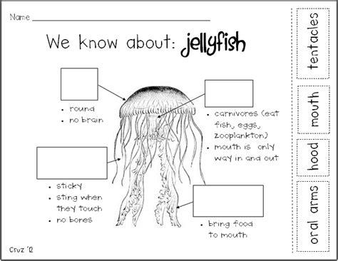 jellyfish worksheets for preschool livinghealthybulletin