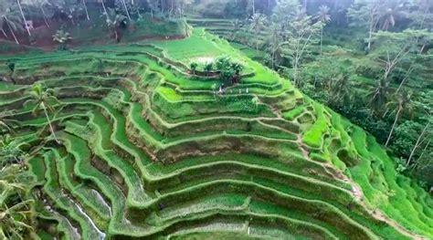 indahnya tegalalang rice terrace ubud bali balikamicom