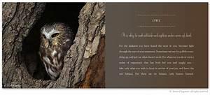 Inspirational Q... Owl City Inspirational Quotes