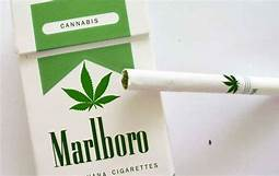 The maker of Marlboro cigarettes is plowing $1.8 billion into the cannabis producer Cronos…