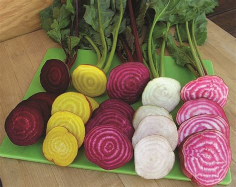 beet color plan your garden now plant later colorado country