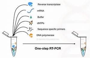 Reverse Transcription Pcr  Principle  Procedure
