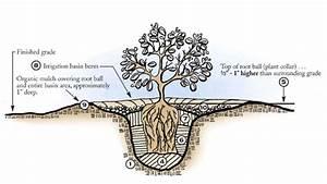 Planting Guide  U2013 Tree Of Life Nursery