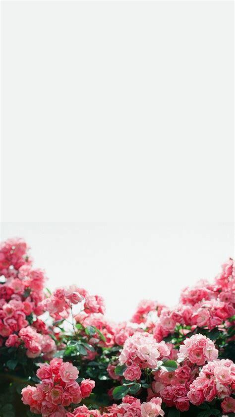 ideas  flowers background iphone  pinterest