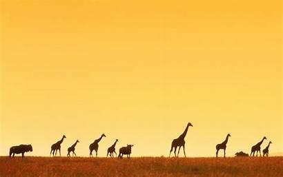 African Wallpapers Widescreen