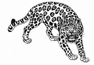 Dessin Jaguar Facile : jaguar animaux coloriages imprimer ~ Maxctalentgroup.com Avis de Voitures