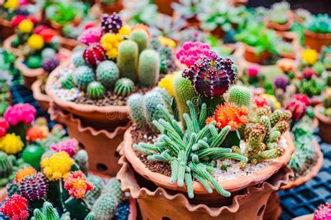 flower pot with variety of succulents in plant store stock of landscape mexico