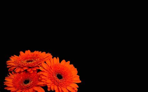 Black And Orange Flower Wallpaper by Pretty Black Background 183 Wallpapertag