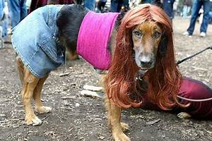 Are dog bitches superior to human bitches? A misogynist ...