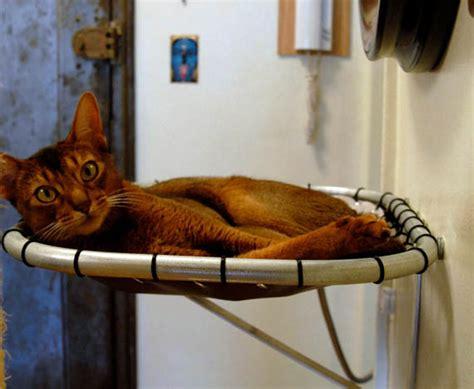 cat hammock bed the hammock cat bed isn t a pedestal but it s