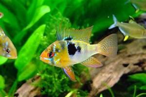 Aquarium Fische Süßwasser Liste : keep aquarium water sparkling with a freshwater test kit 2019 ~ Watch28wear.com Haus und Dekorationen