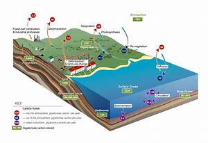 Carbon Cycle Diagram - Oresome Resources
