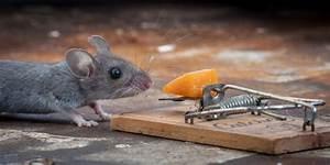 Mouse Vs Mousetrap  25 Pics