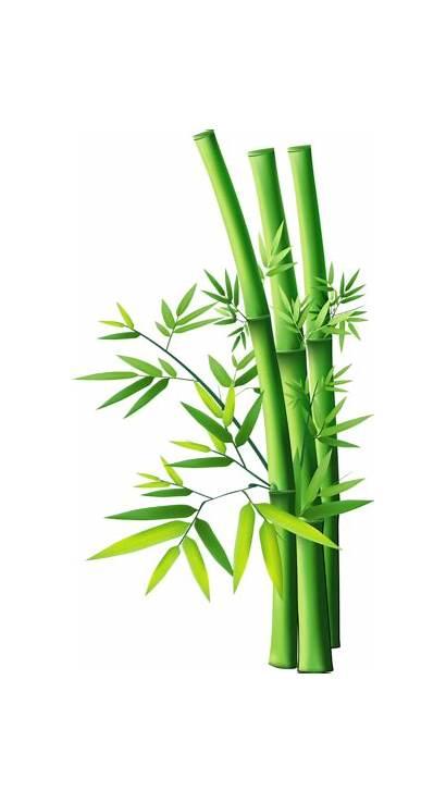 Bamboo Forgetmenot