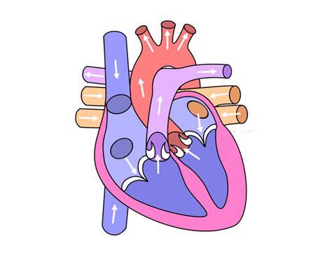 heart quiz