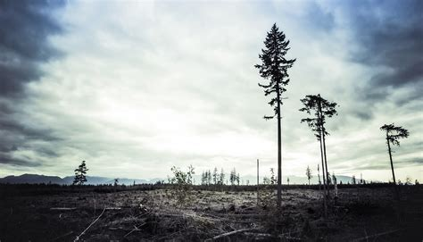 worst ways  stop deforestation futurity