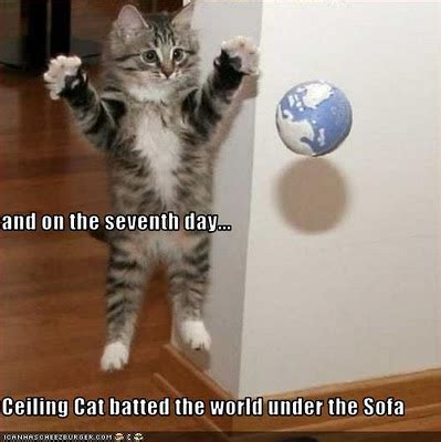 funny image collection funny cat pictures  captions