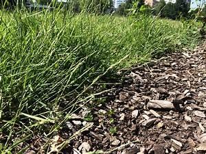 Spritzmittel Gegen Unkraut Im Rasen : rindenmulch effektiver helfer gegen das unkraut ~ Michelbontemps.com Haus und Dekorationen