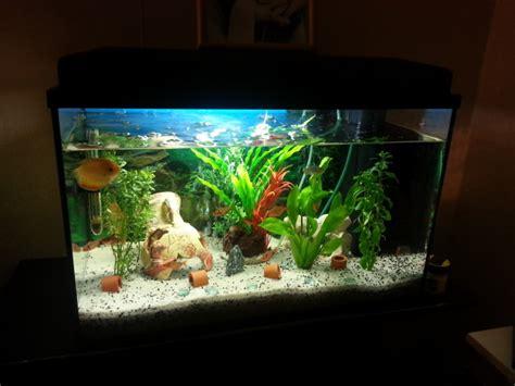 comment preparer un aquarium pour poisson sauver un poisson japonais attaqu 233 par un chat association aquariophilie org