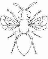 Coloring Flying Insect Housefly Fly Print Colouring Topcoloringpages Insects sketch template