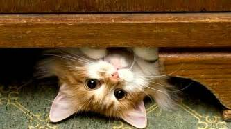 silly cat cat wallpaper hd wallpapers