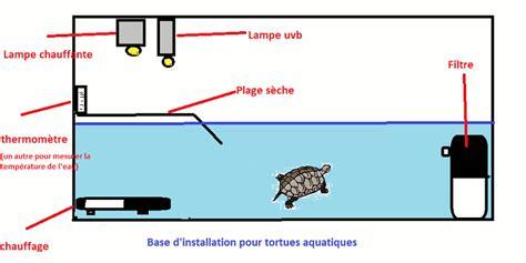 les besoins d une tortue d eau clinique v 233 t 233 rinaire du mail 224 pau 64 v 233 t 233 rinaires pour chien