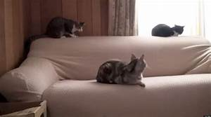 Sneaky Cat Attack (VIDEO)