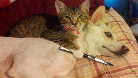 train  dog  stop chasing cats marks dog training