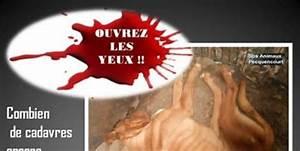 Le Bon Coin Midi Pyrenee : animaux a vendre bon coin ~ Gottalentnigeria.com Avis de Voitures