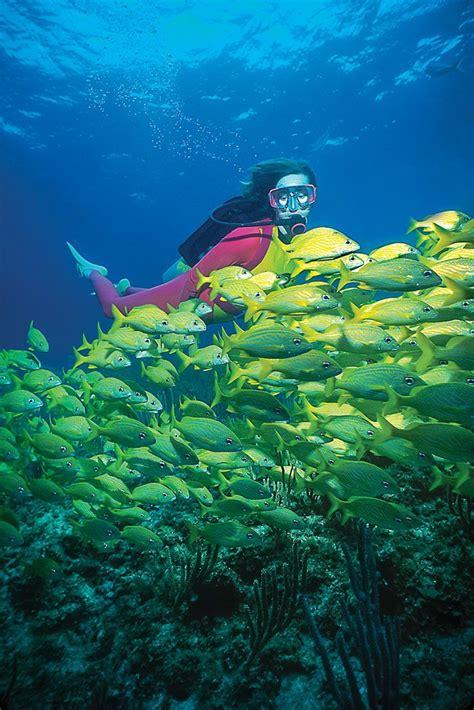 scuba diving    biminis reefs photo bimini big