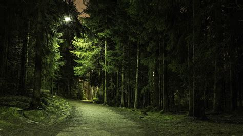 nature trees forest green branch path lights