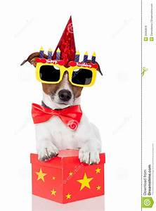 Birthday Dog Stock Photo  Image Of Happiness  Isolated